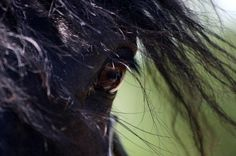 Horse's eye #SaveAmericasMustangs
