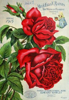 1915 - Miss Ella V. Baines the woman florist Springfield, Ohio : - Biodiversity Heritage Library