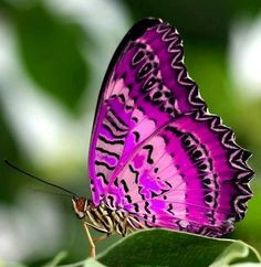 Purple Butterfly via Carol's Country Sunshine on Facebook