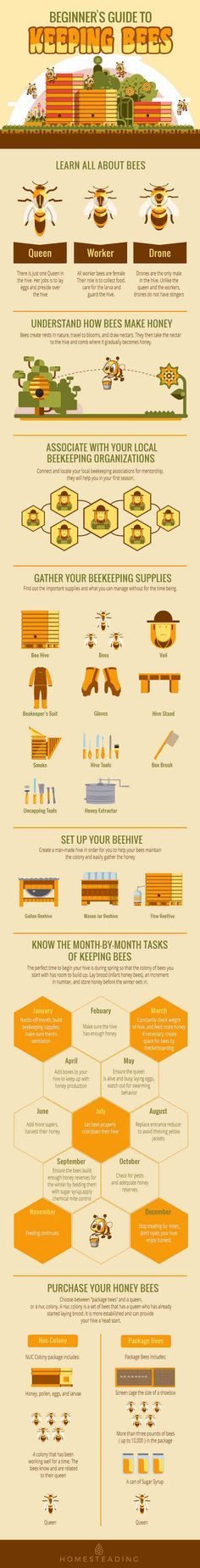 Beginners Guide To Keeping Bees : Homesteading Tips Beekeeping For Beginners, Raising Bees, Raising Chickens, Bee House, Backyard Beekeeping, Backyard Chickens, Bee Farm, Mini Farm, Farm Gardens