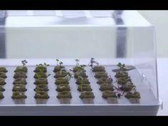 Aventure-se no cultivo dentro de casa: Parte 1