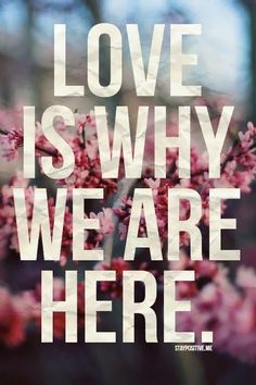"Pinspirational #Quote: ""Love is why we are here"""