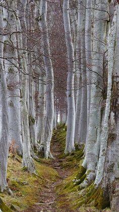 Picturesque Trees
