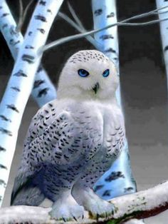 SHARPEST LITTLE BEAK AND MOST BEAUTIFUL BLUE EYES............ccp