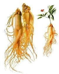 What are the benefits of red Korean ginseng?  Ginseng all the herbs in the most effective adaptogen (an agent to increase resistance to stress) is considered. It is also a plant that increase physical activity and body strength and physical and mental (mental) increases durability. Since a long time, in particular the productivity of man, male hormone (testosterone) and sperm quantity, potency and circulatory systems (especially against prostate) are known to influence in a positive manner