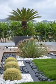Resultado de imagen para jardin desertico**ριитєяєѕт: ♡ Angel ♡💋