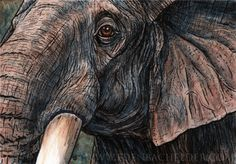 Elephant watercolour, signed print from an original ink and watercolor painting, by Eden Bachelder