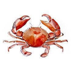 Crab paintings, Red crab art, Original watercolor paintings of crab, Sea life illustrations 10 x 14 inch by Elena Romanova. $40.00, via Etsy.