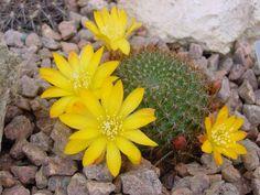 Cactus, Desert Plants, Edible Plants, Garden Ideas, Flora, Succulents, Mushrooms, March, Pictures