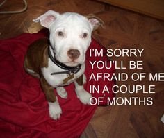 We need education, education, education!  We have to save our babies and stop BSL!!!