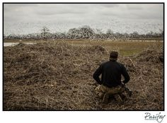 Planning the attack.  @mr_wissing #mississippi #goose #hunting #halowaterfowl #drakewaterfowl