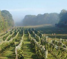 Benmarl Winery at Slatehill Vineyards
