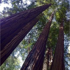 Muir Woods National Park, California