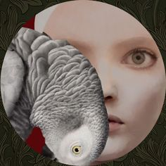 Oblique look -Daria Petrilli- Daria Petrilli, Magic Realism, Bird Wings, Italian Art, Pop Surrealism, Art Studies, Book Illustration, Great Artists, Art Girl
