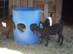 Homemade Hay Feeder for sheep or goats Goat Hay Feeder, Diy Hay Feeder, Goat Playground, Deer Feeders, Goat Shelter, Goat Pen, Goat House, Goat Care, Dwarf Goats