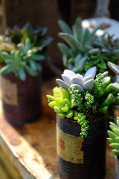 Succulents in old jars or tins. Perfect aesthetic.