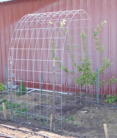 Super Ideas for diy garden trellis grape arbor Bean Trellis, Grape Vine Trellis, Diy Trellis, Grape Vines, Trellis Ideas, Pole Beans Trellis, Wall Trellis, Hops Trellis, Garden Arch Trellis