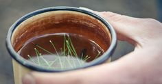 Although used for centuries by Native Americans, pine needle tea is not well known by the general public today. But it's certainly worth ...