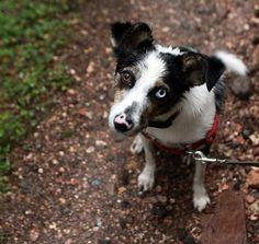 Milo Dog Treats Killing Dogs