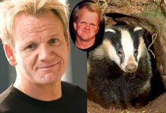 It Proves You Can't Hump Everything. I Bet He Was From Alabama! Funny Stories, True Stories, Chef Gordon Ramsay, Bad Temper, Tv Chefs, Cartoon Jokes, Look Alike, Badger, The Fosters