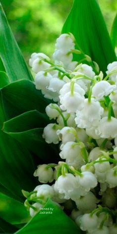green&white.quenalbertini2: Pretty flowers   Jadranka