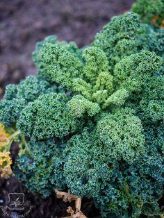 Edible Plants, Superfoods, Kale, Bonsai, Broccoli, Stuffed Mushrooms, Food And Drink, Vegetables, Drinks