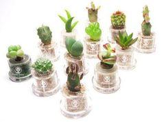 plants wedding favors - Google Search