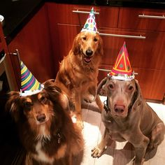 Finn turns 6 with Buck and Billy