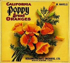 Redlands- California Poppy Orange Citrus Fruit Crate Box Label Art Print