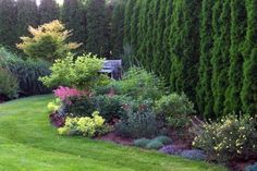 Love purple and chartreuse together in a garden bed
