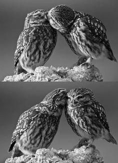 .bird love