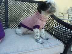 Ravelry: Barkley Dog Sweater by Luciana Young