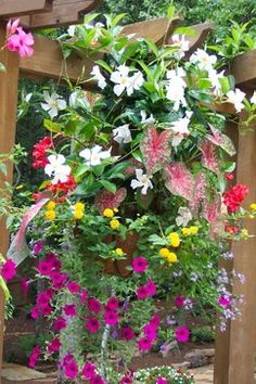 all the flowers in this planter would be suitable for a sunny location. Depending on how hot your climate gets it is important to remember that a little afternoon shade is always good for a hanging basket like this. Hanging Baskets, Container Gardening, Garden Landscaping, Landscape Design, Succulents, Planters, Home And Garden, House Design, Fireplaces