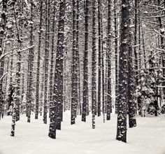 i want to live in a snowy wood