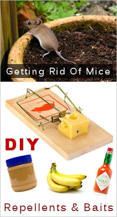 survivalism: Homemade Mouse Repellents & Baits: {DIY Recipes & Tips} also more indoor/outdoor repellents given Bug Control, Pest Control, Mice Repellent, Getting Rid Of Mice, Pest Management, Tips & Tricks, Food Hacks, Good To Know, Just In Case