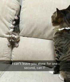 cats, funny, and meme image