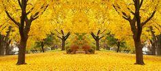 bosque_amarillo_profundidad_muralesyvinilos_5103543__XL.jpg (790×350)