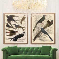 Gallivani Birds