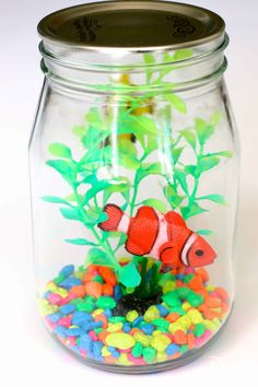 Mason Jar Aquarium-4