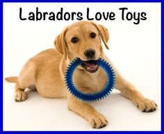 How Much Exercise Does My Labrador Need? - The Labrador Site