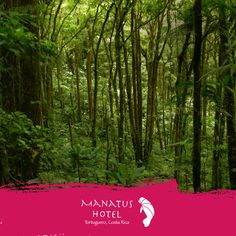 Tortuguero cuenta con 11 habitats ecológicos, desde bosque lluvioso hasta una serie de pantanos. #EcoTurismo