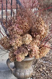 Pretty things dried hydrangeas, red twigged dogwood with bamboo branches in urn Shopping Tips For Fu Hydrangea Vase, Dried Flower Arrangements, Fall Arrangements, Christmas Arrangements, Outdoor Christmas Decorations, Dried Flowers, Christmas Trees, Xmas, Outdoor Decor