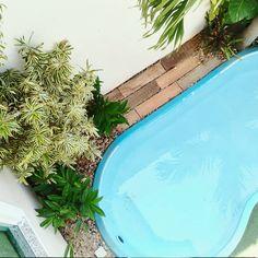 Novo jardim da piscinacom decks de porcelanato imitando madeira, pleomele, alpinas e pedrisco