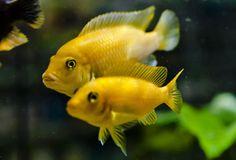 Aquarium center - dal 1975 a Ravenna pesci d'acqua dolce, pesci marini, piante acquatiche ed invertebrati, acquari e supporti, accessori per acquariofilia, alimenti per animali domestici, accessori per animali, igiene personale e pulizia della casa, giardinaggio
