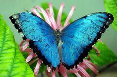 A jungle butterfly
