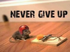 Super Cute Motivational Quote w/ Mouse & Cheese Photo : Never Give Up