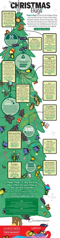 Adopt-A-Bug this year for the holidays! Bringing a live tree into your home is like inviting the great outdoors into your living room. Here are a few new friends you can make that will decorate your tree and light up your life, plus some statistics to share over your eggnog.