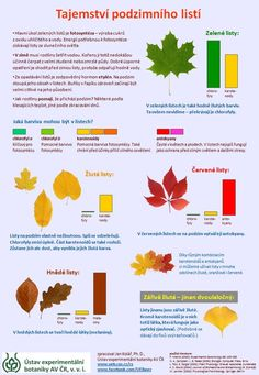 Tajemství podzimního listí - infografika o změnách barvy listů na podzim Autumn Activities For Kids, Science For Kids, Preschool Activities, Montessori, School Clubs, Autumn Crafts, Elementary Science, School Humor, Home Schooling