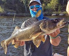 Get all the buzz on angling and fishing in the Midwest. Fish Information, Walleye Fishing, Fishing Tips, River, Rivers
