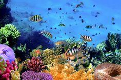 Coral Reef at Koh Cahg Island - Wall Mural & Photo Wallpaper - Photowall Snorkeling, Underwater Wallpaper, Coral Bleaching, Under The Ocean, Underwater World, Fauna, Stock Foto, Photo Wallpaper, Galaxy Wallpaper